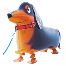 CĂȚEL DACHSHUND - BALON FOLIE FIGURINA, MODEL WALKING, 68CM